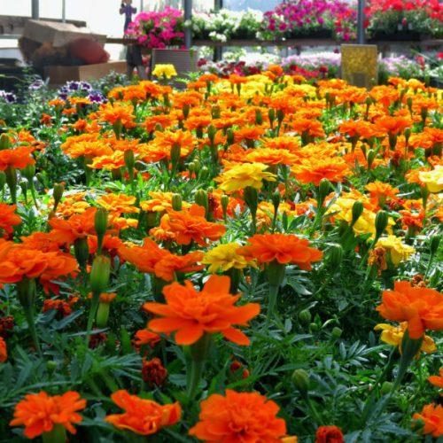 plant-nursery-online