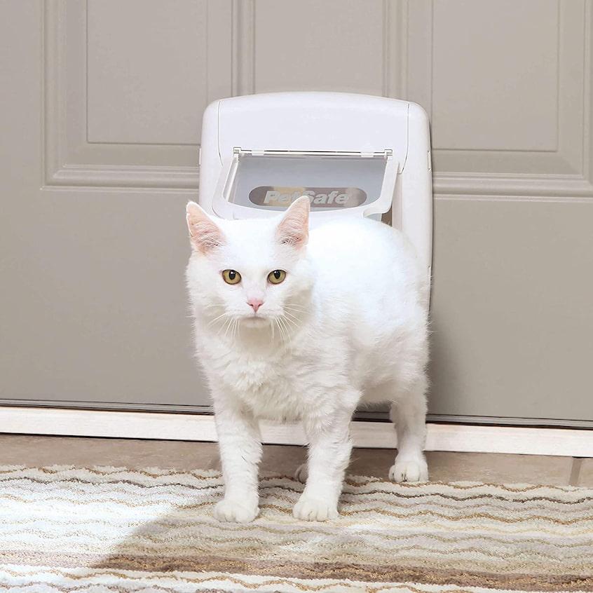 cat access door
