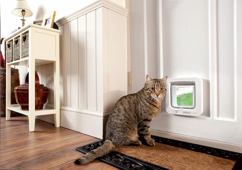 cat standing in front of the cat door