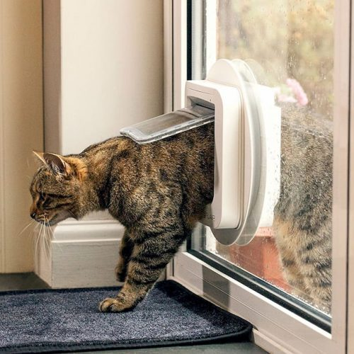 cat walking through cat door