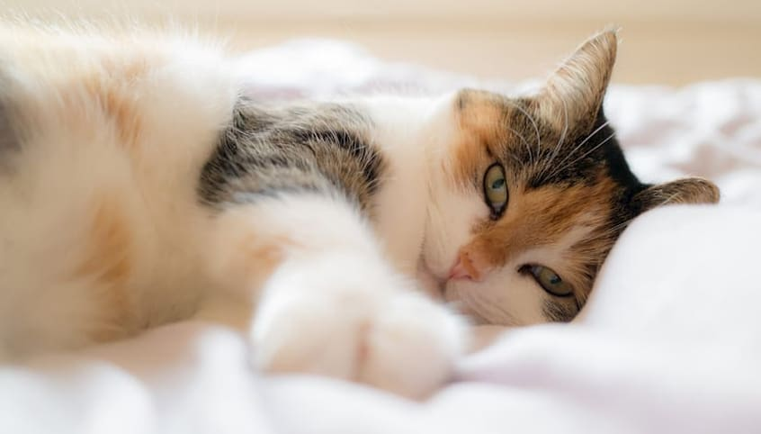 cat laying in bed