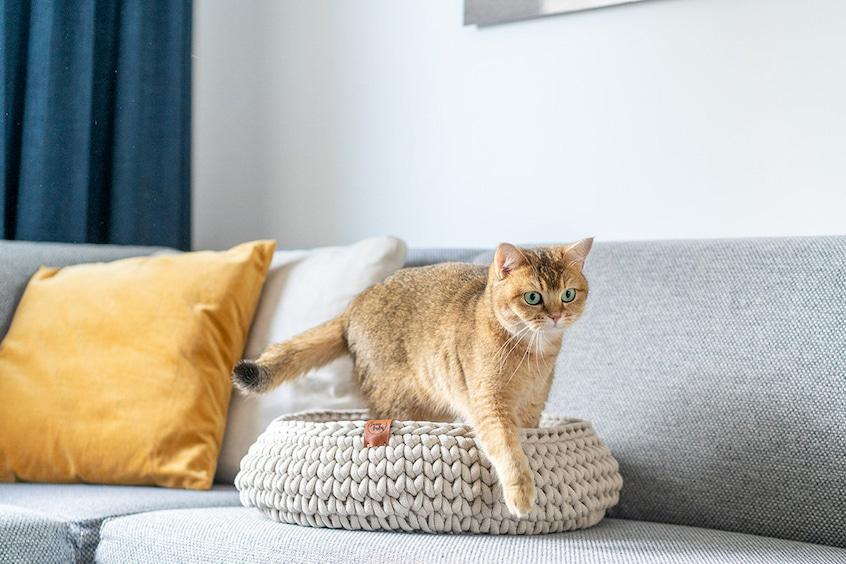 cat cuddler bed