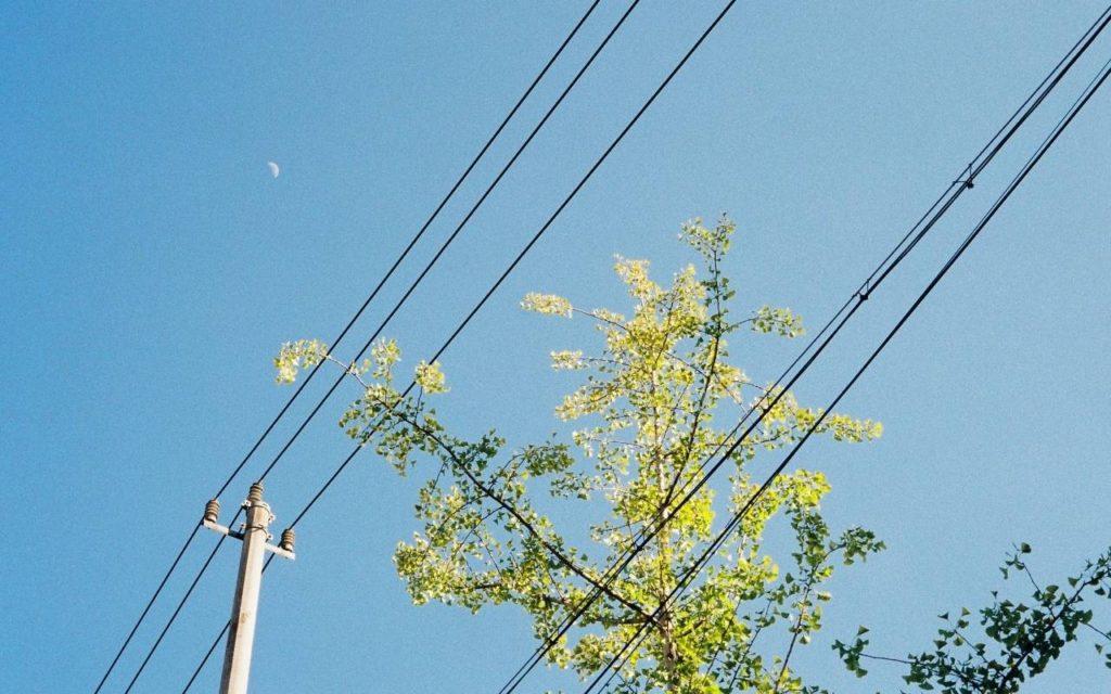 Power Line Danger tree