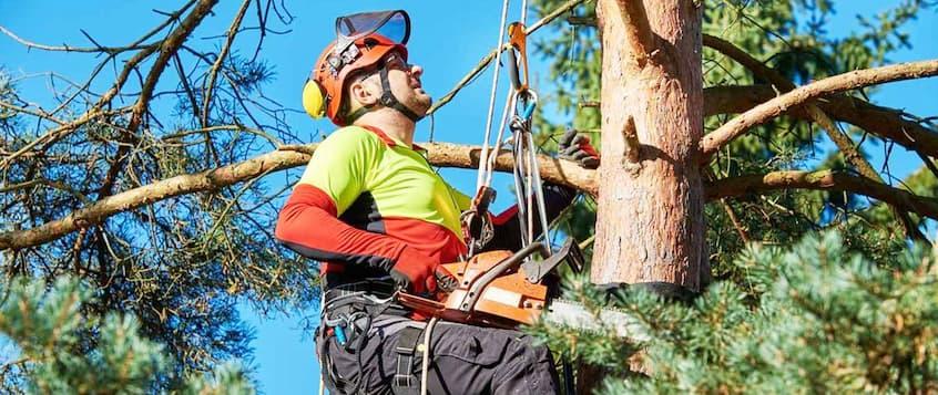 professional tree arborist