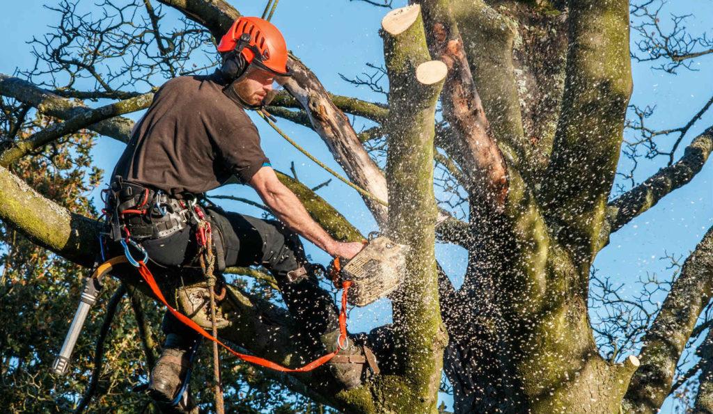 professional tree arborists